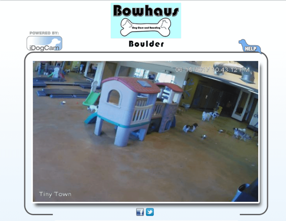Webcams for doggy daycare