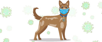 Your pet care business doesn't need to worry about COVID-19 infecting pets as much as you would with other coronaviruses.