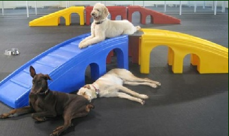 Modular equipment is a great option for your dog daycare playground.
