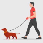 This image shows a person walking a small brown dog, illustrating the need for your dog daycare software to facilitate quick check-in and check-out to get people on their way with their pets.