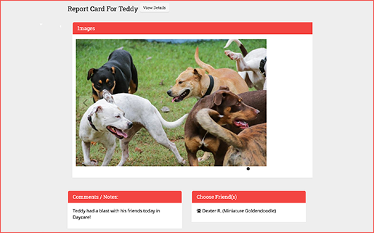 This is a screenshot of Gingr's dog report card, which users can access using Gingr's dog daycare software.