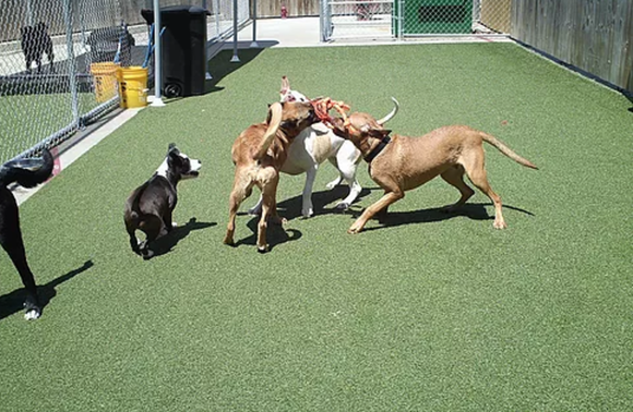 It's crucial that the dogs in your care can get along with the other animals in your care.