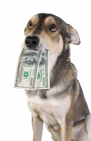 Help your customers navigate the confusing world of financial aid for pet care.