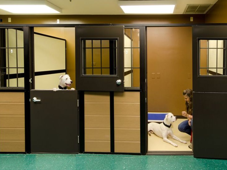 How can you maximize occupancy for your pet care business?