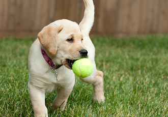Brand your tennis balls to sell as a part of your pet business merchandise strategy.