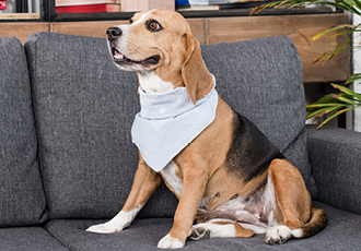 Bandanas are a great pet business merchandise idea for both humans and pets.