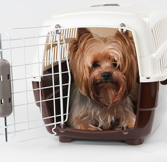 Branded pet carriers are a unique and useful pet business merchandise idea.