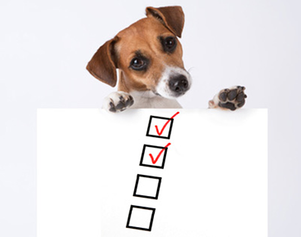 Is your pet care business ready for spring break?