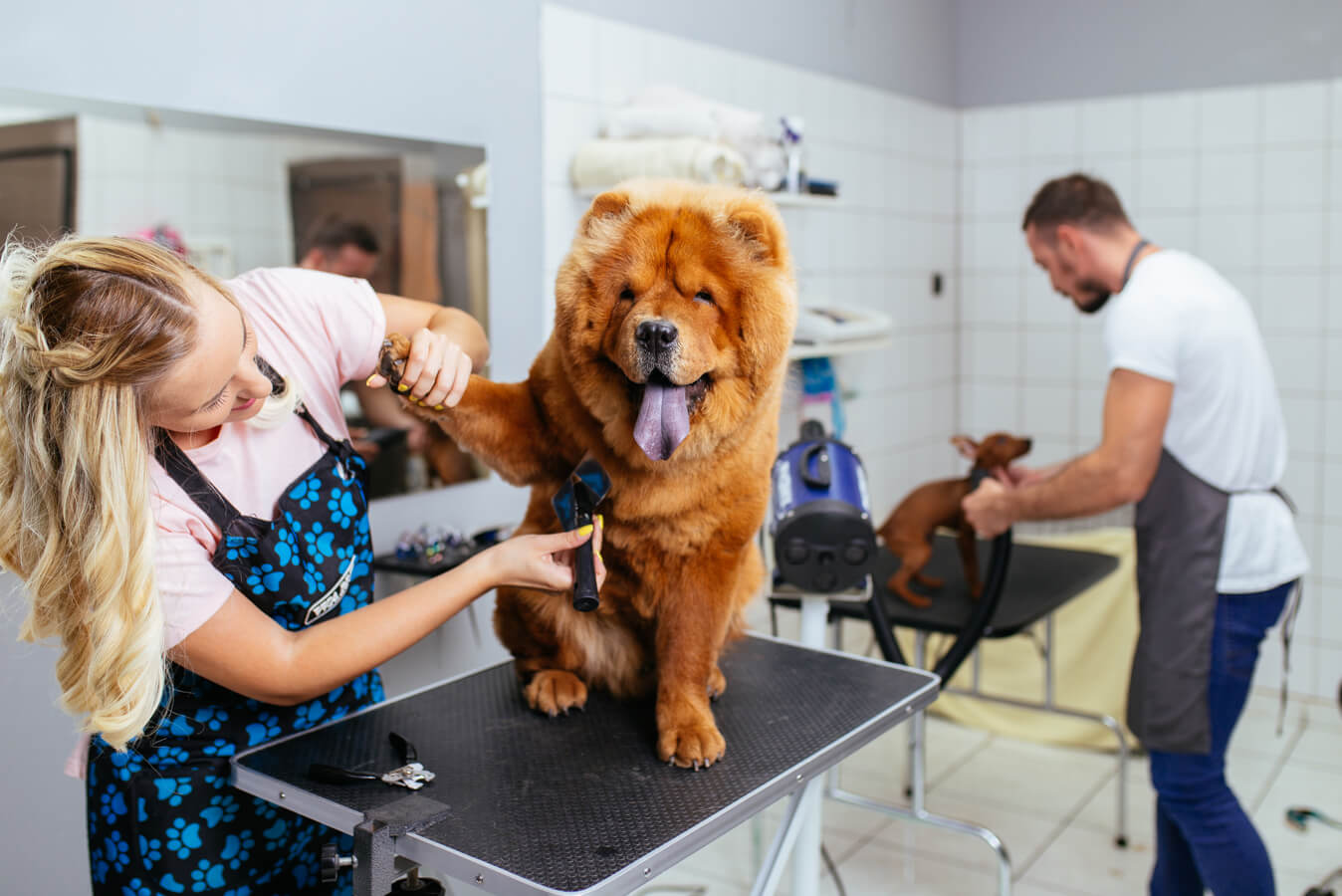 With Gingr's dog grooming software, your business will be able to grow and thrive.